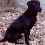 Jake from Elk River Kennels